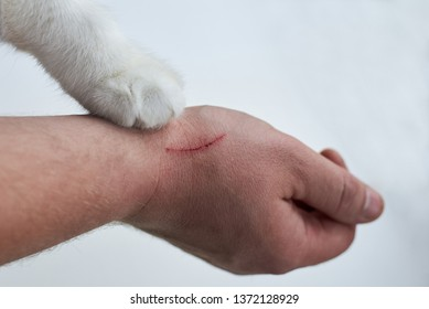Scratch on a man's hand made by a cat, a cat's paw on a hand of an owner on a white background, close-up