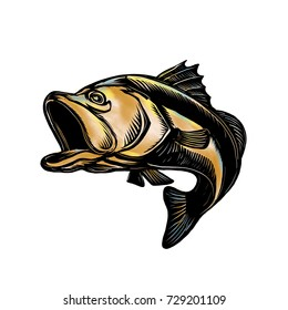 Scratchboard style illustration of a Largemouth Bass ,  Barramundi or Asian sea bass jumping on isolated background.