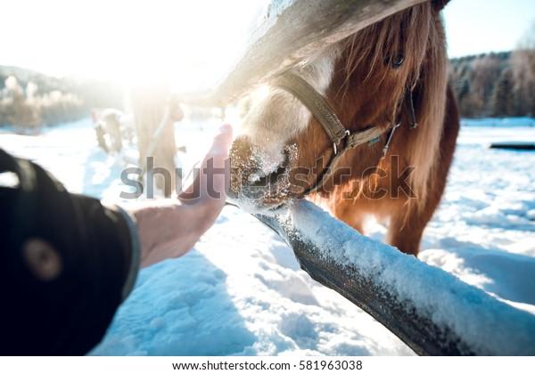 Scratching a horse