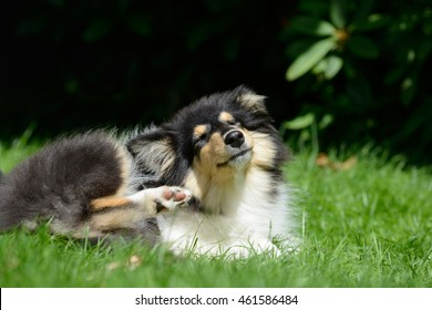 scratching puppy on meadow