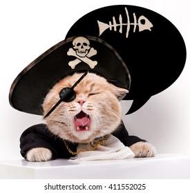Screaming cat in a pirate hat