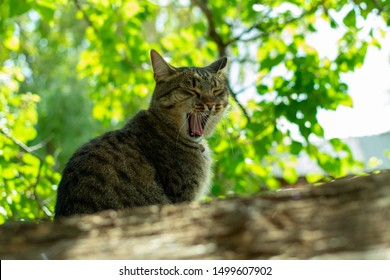a screaming cat sees in the spring under a tree and calls a cat