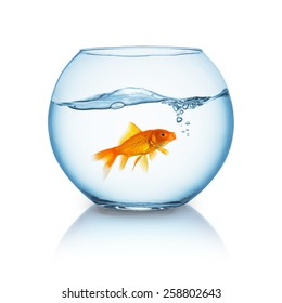 screaming goldfish in a fishbowl isolated on white background
