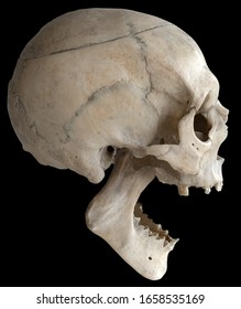 Screaming human skull, side view. A human skull with a wide-open jaw, isolated on a black background in close-up.