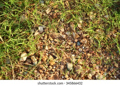 scree rock with grass