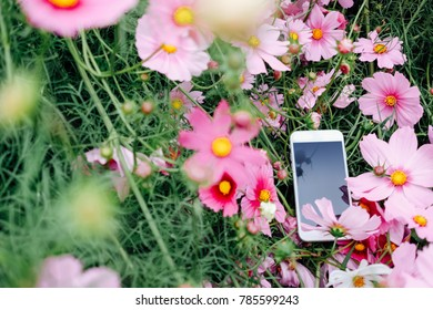 Screen, can add text or picture, pink flowers background