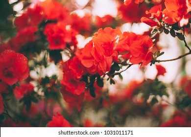 screensaver, background and wallpaper for your desktop and advertising, on the photo flowers azaleas and orchids in vintage fashionable style