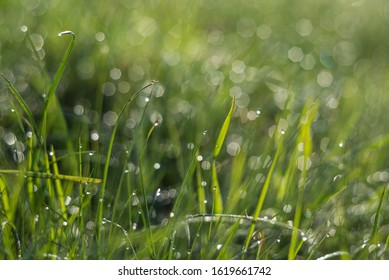 Screensaver of green grass with bokeh