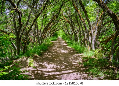 Scrub oak pathway at Red Butte Garden