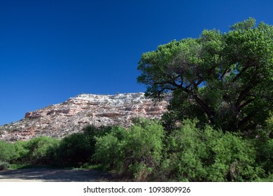 Scrubby Mesquite trees and tall Cottonwoods stand beside the rocky cliff in Dead Horse Ranch State Park near Cottonwood, Arizona