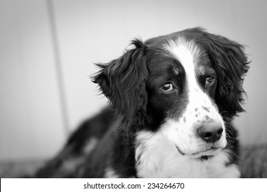 Scruffy Dog - This is a black and white shot of a scruffy old dog with tired eyes.