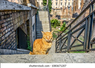 Scruffy orange tabby cat on the steps of the cat sanctuary at Torre Argentina in Rome Italy