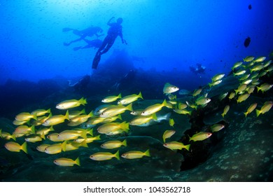 Scuba dive coral reef and fish underwater