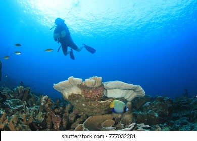 Scuba dive coral reef with fish