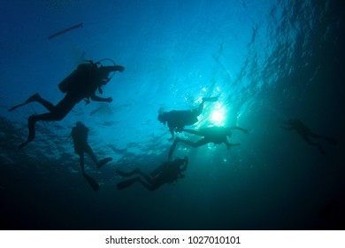 Scuba dive in ocean