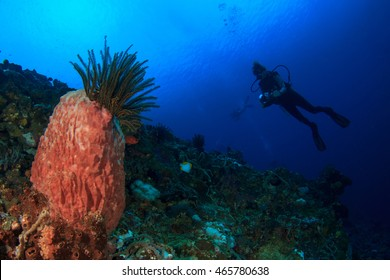 Scuba Dive. Young woman scuba diving on coral reef.