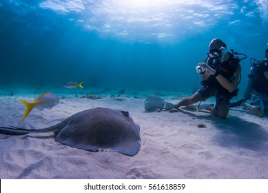 a scuba diver captures a southern stingray on camera while diving in Stingray City Grand Cayman. The shallow waters of the north sound make perfect conditions for underwater photography