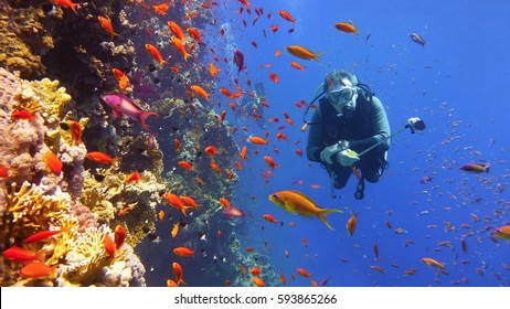 Scuba diver and coral reef with fish