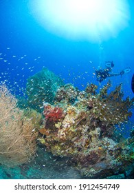 Scuba diver in a coral reef (Red Sea, Sharm El Sheikh, Egypt)