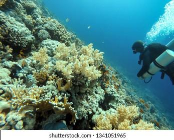 Scuba diver descending to the bottom closeup photo