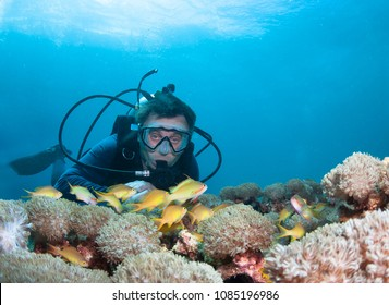 Scuba diver exploreds coral reef.