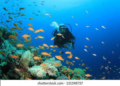 Scuba Diver explores coral reef with tropical fish