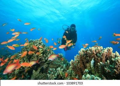 Scuba Diver exploring a coral reef