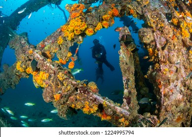 SCUBA diver exploring an old, coral encrusted underwater shipwreck in a tropical ocean (Boonsung, Thailand)
