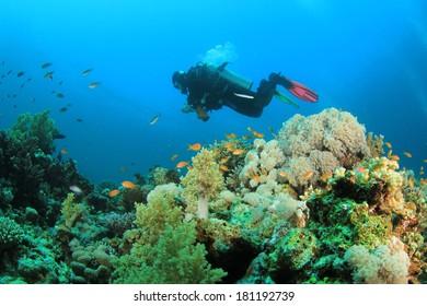 Scuba Diver exploring reef