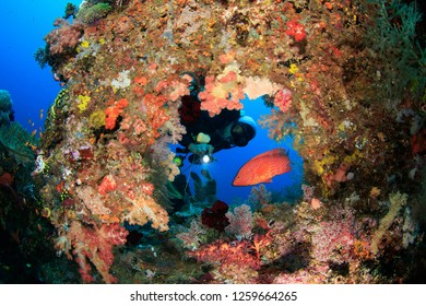 Scuba Diver with flashlight looking at red coral grouper through natural frame look through whole on a soft coral covered reef in Raja Ampat, Indonesia