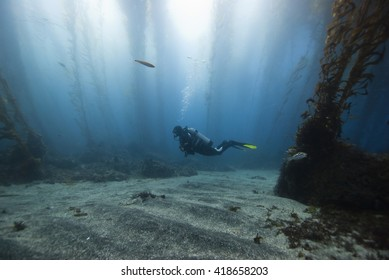 Scuba Diver in a glade of a kelp forest with sun in the background.