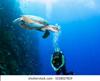Scuba diver and a green turtle on a coral reef at Bunaken, Sulawesi