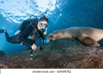 Scuba diver interacting with a curious sea lion, Sea of Cortes Mexico