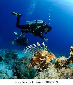 scuba diver with lion fish