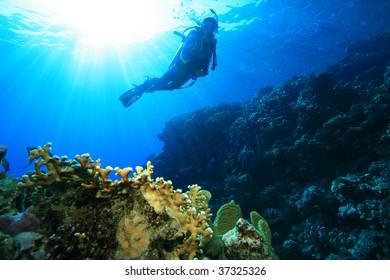Scuba DIver on a sun lit reef