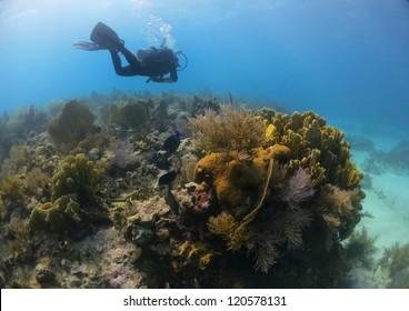 Scuba Diver over Coral Reef