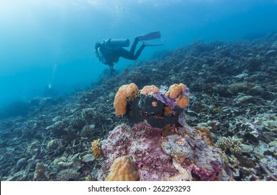 Scuba Diver passing through colorful tropical coral reef with fishes.
