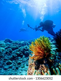 Scuba diver photographer on the underwater coral reef.