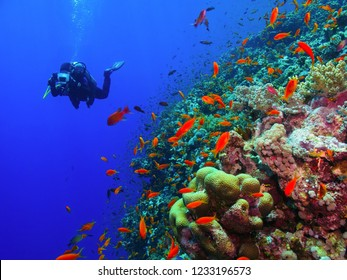 Scuba diver photographer swimming in the blue ocean with colorful coral reef. Corals, red fish and scuba diver with underwater camera. Blue water, deep diver and tropical reef.
