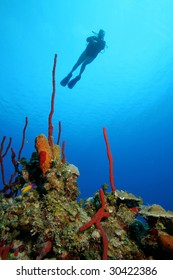 SCUBA Diver and red corals