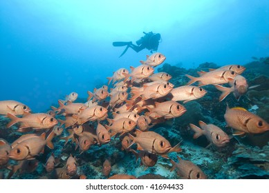 SCUBA Diver and Red fish
