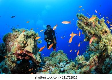 Scuba Diver in the Red Sea, Egypt