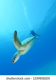 scuba diver with sea turtle underwater