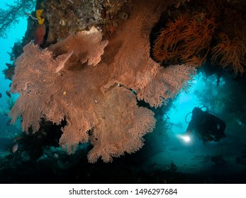 scuba diver with seafan and coral reef