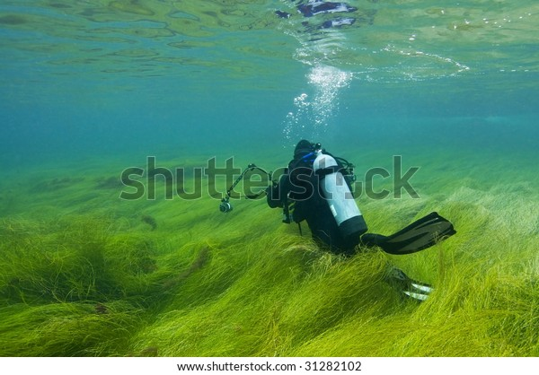 Scuba diver in shallows of thick sea grass