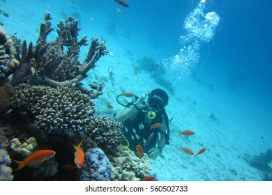 Scuba Diver in Sharm El Sheikh. Diving in Red sea. Frogmen underwater