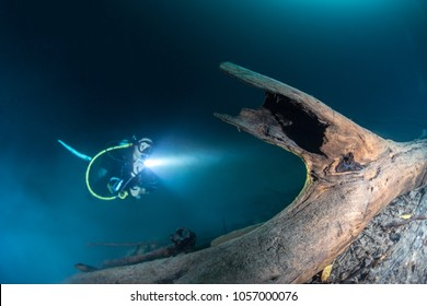 Scuba Diver shining light over tree in Cenote Angelita, Quintana Roo, Mexico