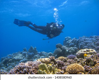 Scuba diver swimming above the coral reef at dive site Ras Abu Galum in Dahab, Egypt.