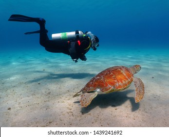 Scuba diver with swimming green sea turtle (Chelonia mydas) in the blue ocean. Marine animal and diving woman. Ocean life and scuba diving tourist. Shallow sea life, underwater photography.