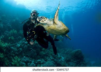 scuba diver swimming with turtle